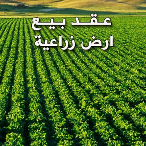عقد بيع ارض زراعية نهائى ملف وورد Doc صيغة بيع للاراضي الزراعية