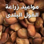 مواعيد زراعة الفول البلدى وطريقة رعايته حتي الحصاد