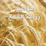 مواعيد زراعة القمح فى مصر 2019
